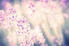 pastell.summer*
