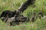 pasto degli avvoltoi