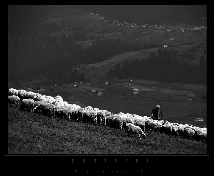 pastoral