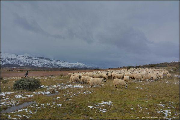 Pastoreo invernal