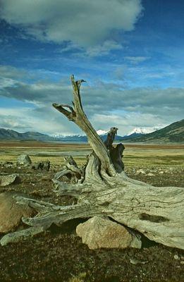 Patagonien - das Land der Gletscher