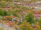 patagonische Farbenpracht