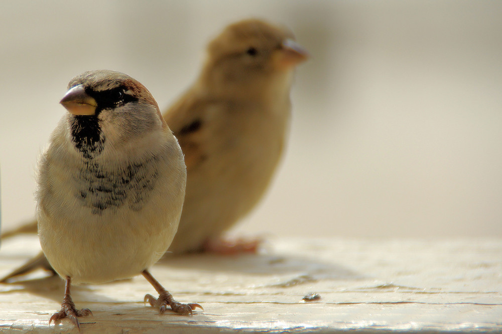 Patagonische Strandvögel.