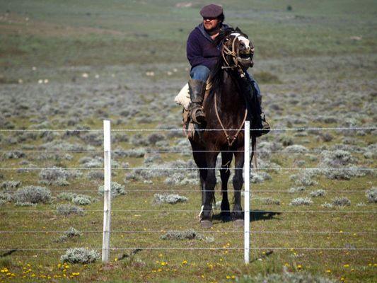 patagonischer Huaso