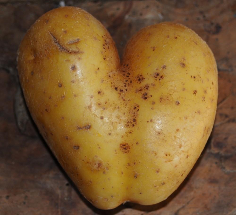 patate o g aime