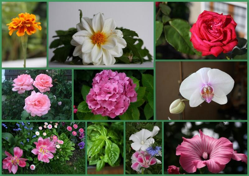 Patchwork fleuri