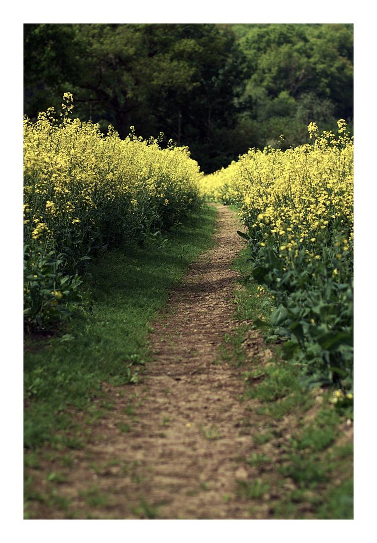 Path through...