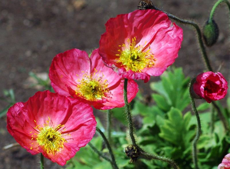PATRICE'S FLOWERS