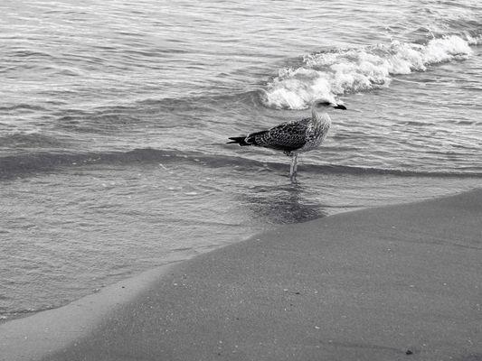 patte à l'eau et bec au vent