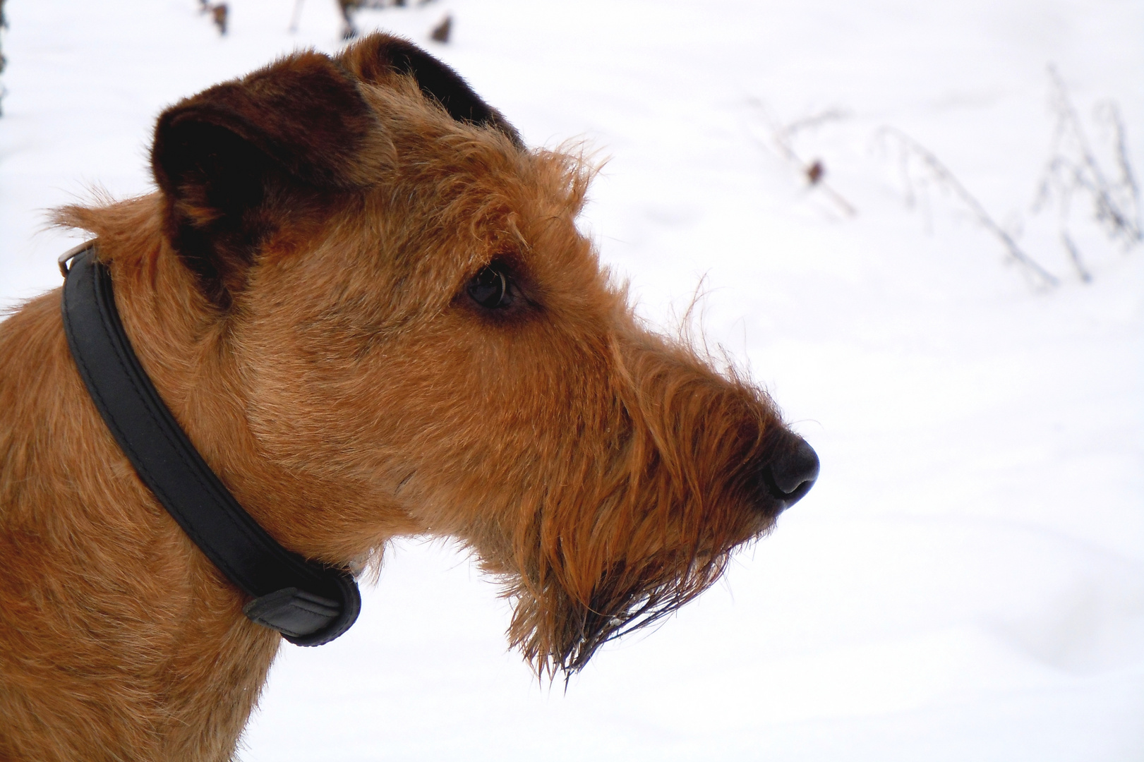 Paul im Schnee / 28.12.2010