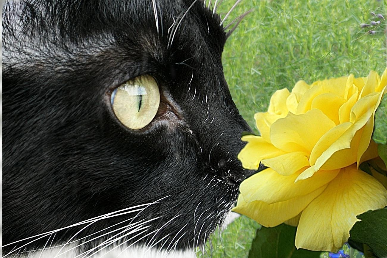 Paul liebt Blumen
