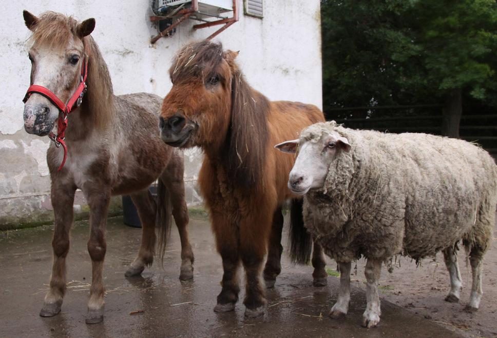 Paul (re.) weiß genau, in einem anderen Leben war er ein Pony.
