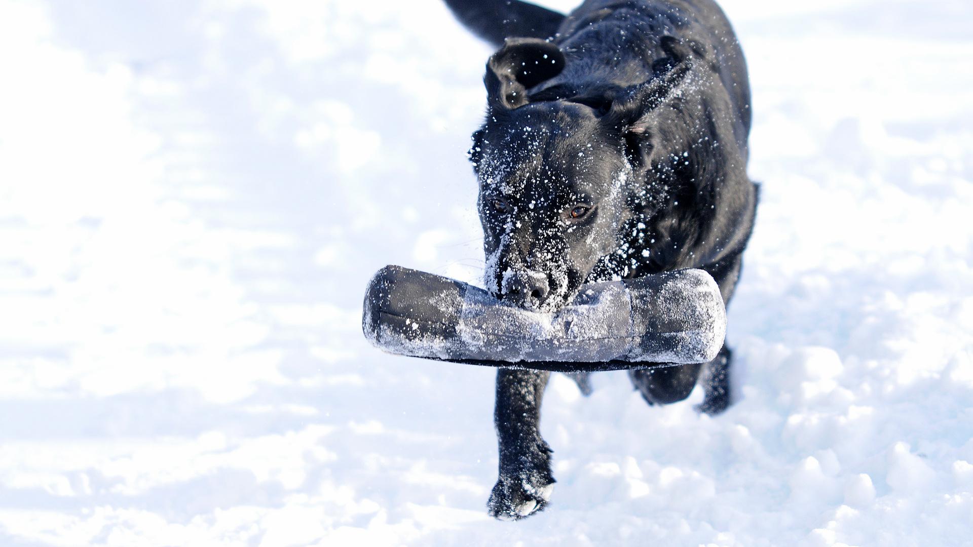 Paula im Schnee
