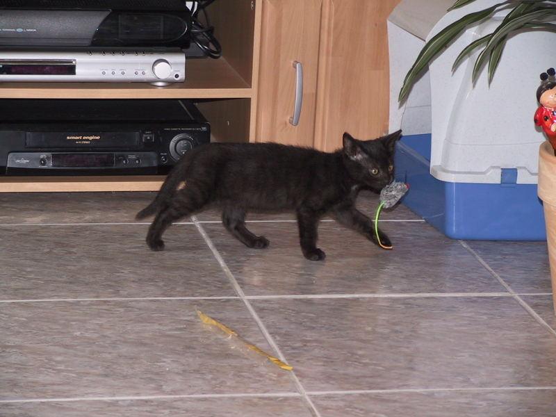 Paula, meine erste Maus