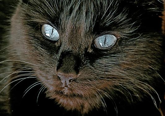 Paula mit blauen Augen