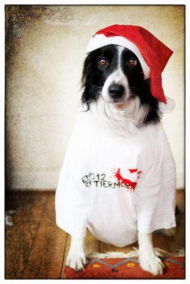 Pauls Weihnachtswunsch.... EM 2012  ohne Tiermord