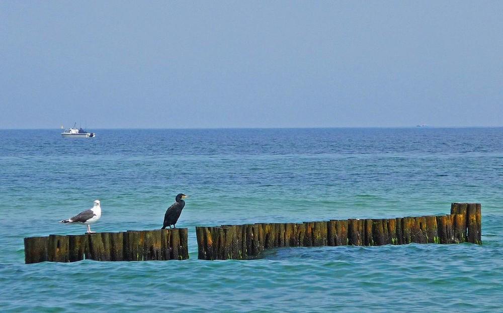 Pause auf dem Wellenbrecher Ostsee bei Warnemünde