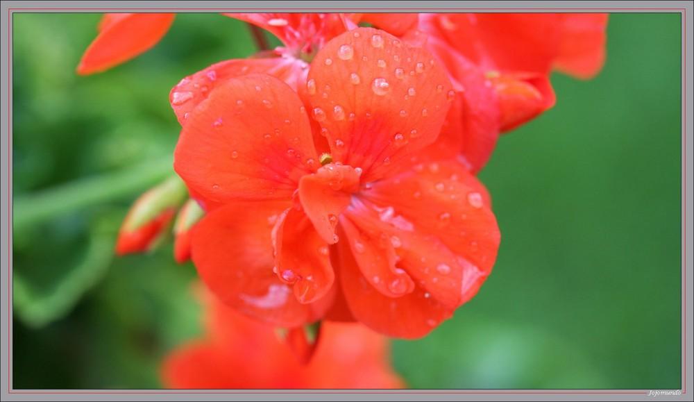 """"""" pauvre petite fleur triste........"""