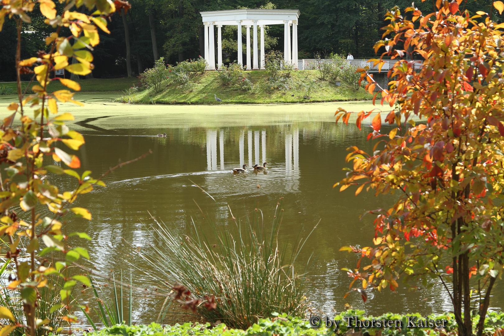 Pavillon im kleinen Tannenwald