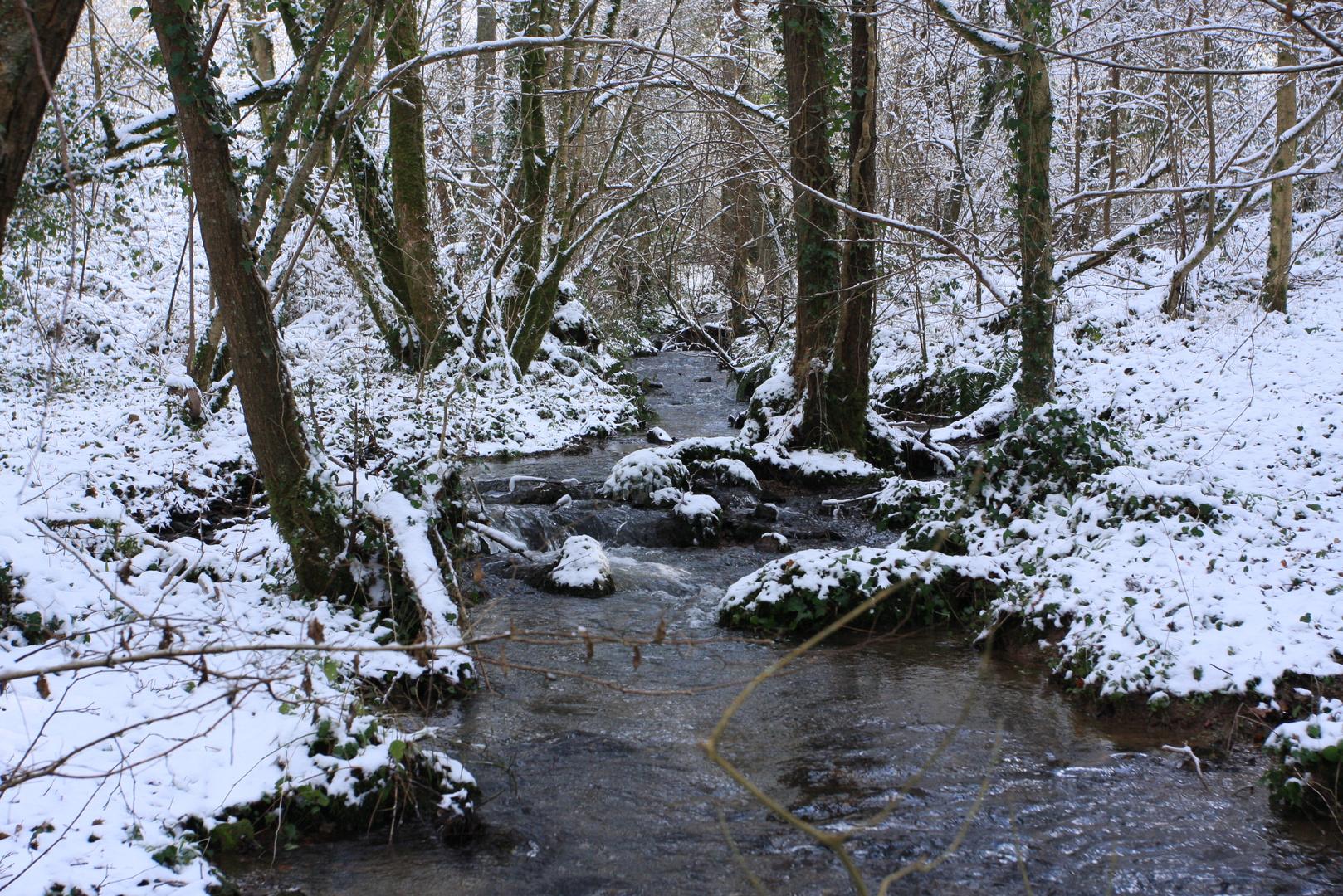 Payasge sous la neige
