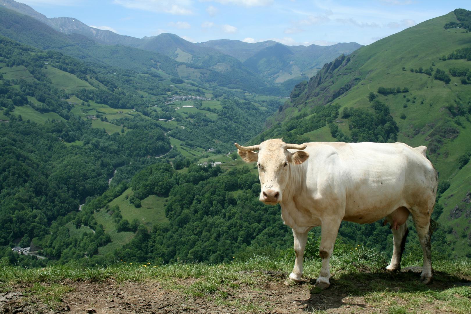 Pays Basque ( Vue sur la Vallée de la Soule)