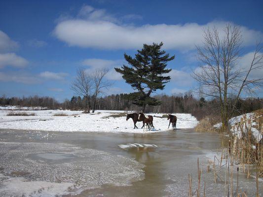 Paysage avec chevaux
