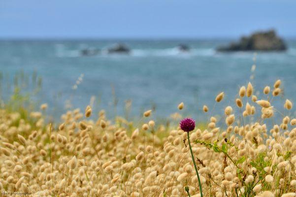 paysage côte sauvage bretonne