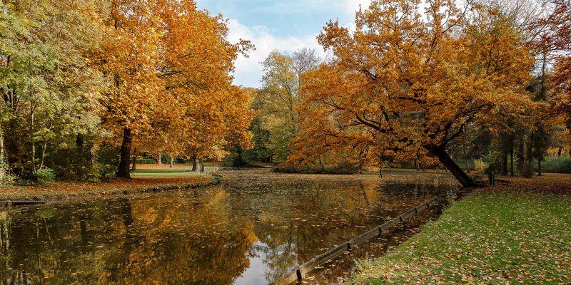 Paysage d'automne #1