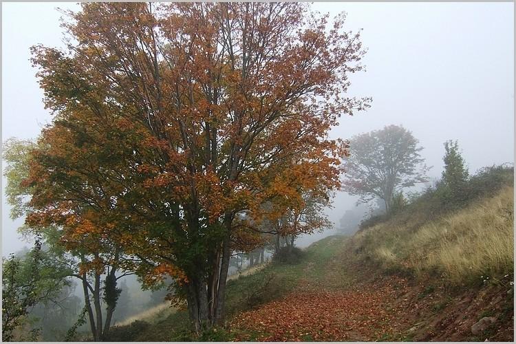 Paysage d'automne sur les hauteurs d'Hohrodberg