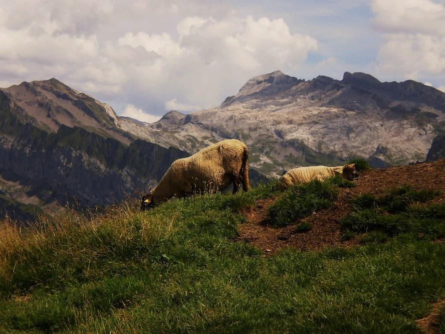 paysage de Hte-Savoie