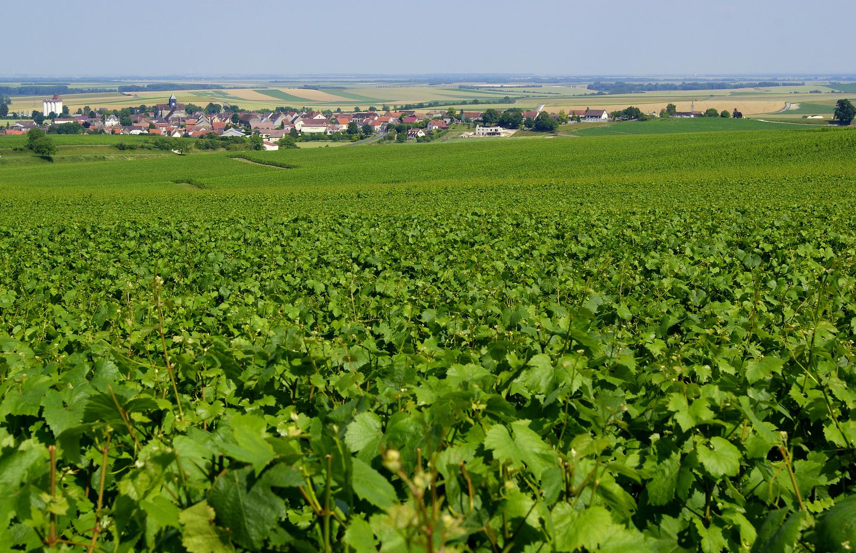paysage de la Champagne