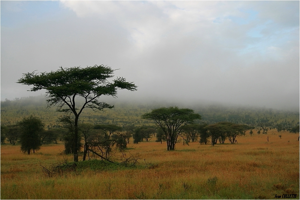 Paysage de la savane africaine photo et image - Felin de la savane ...