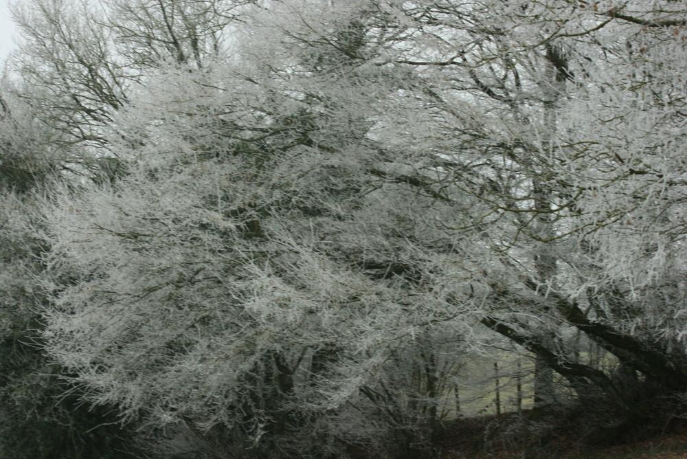 Paysage d'hiver arbres givrés