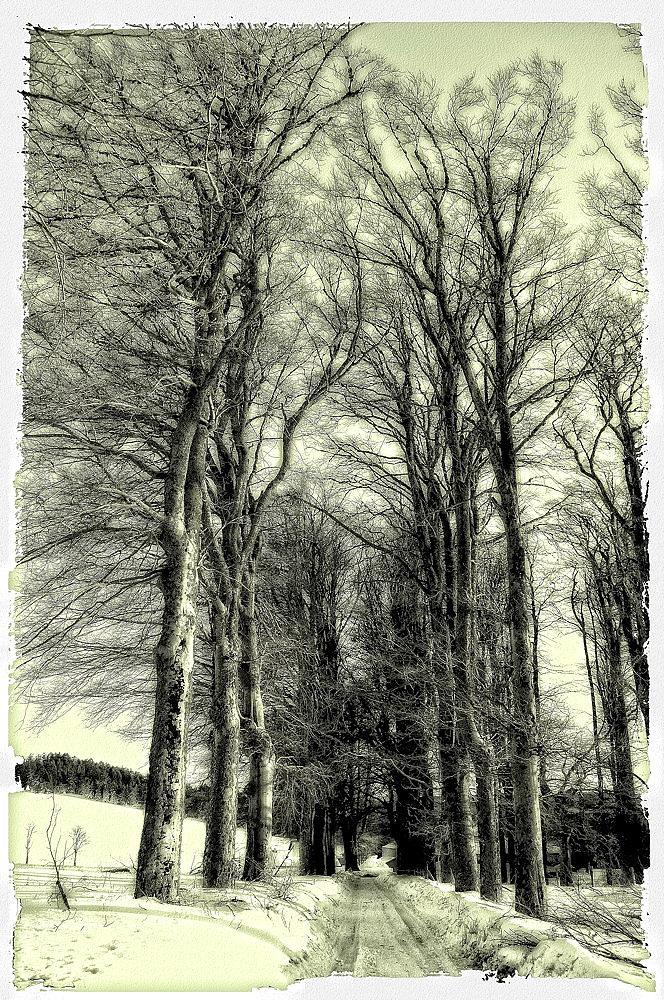 Paysage d'hiver.... façon lithographie ...