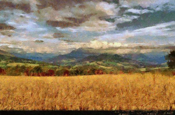 Paysage du Vercors aux champs de blés