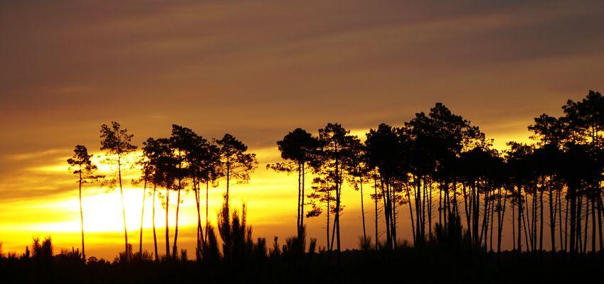 Paysage Landais au lever du soleil......