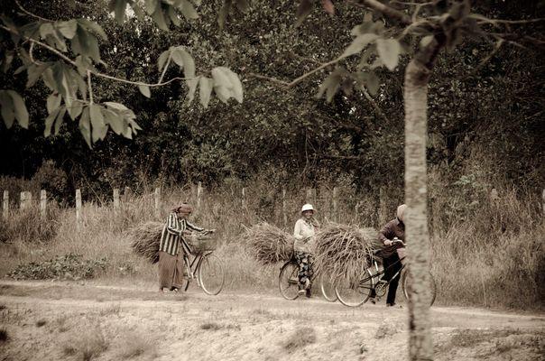 paysan cambodgien