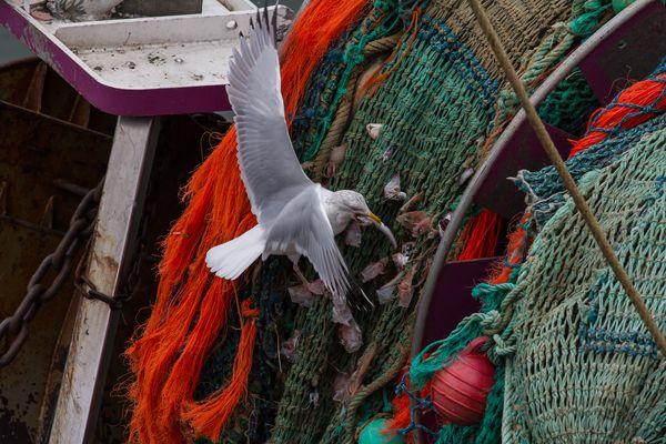 Pêche à Guilvinec