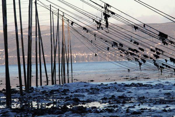 Pêches à Anguilles sur le St-Laurent