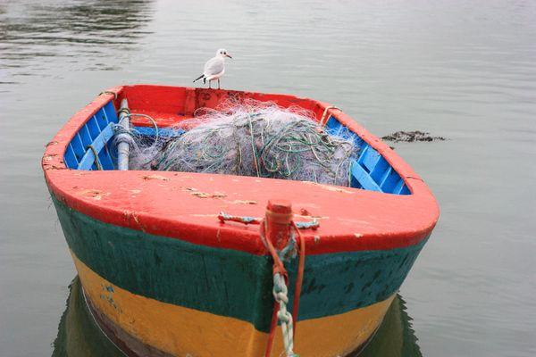 Pêcheur-volant