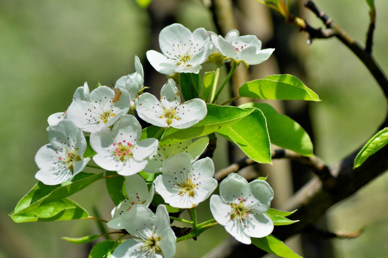 Peach Flower's