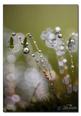 Pearls of Nature