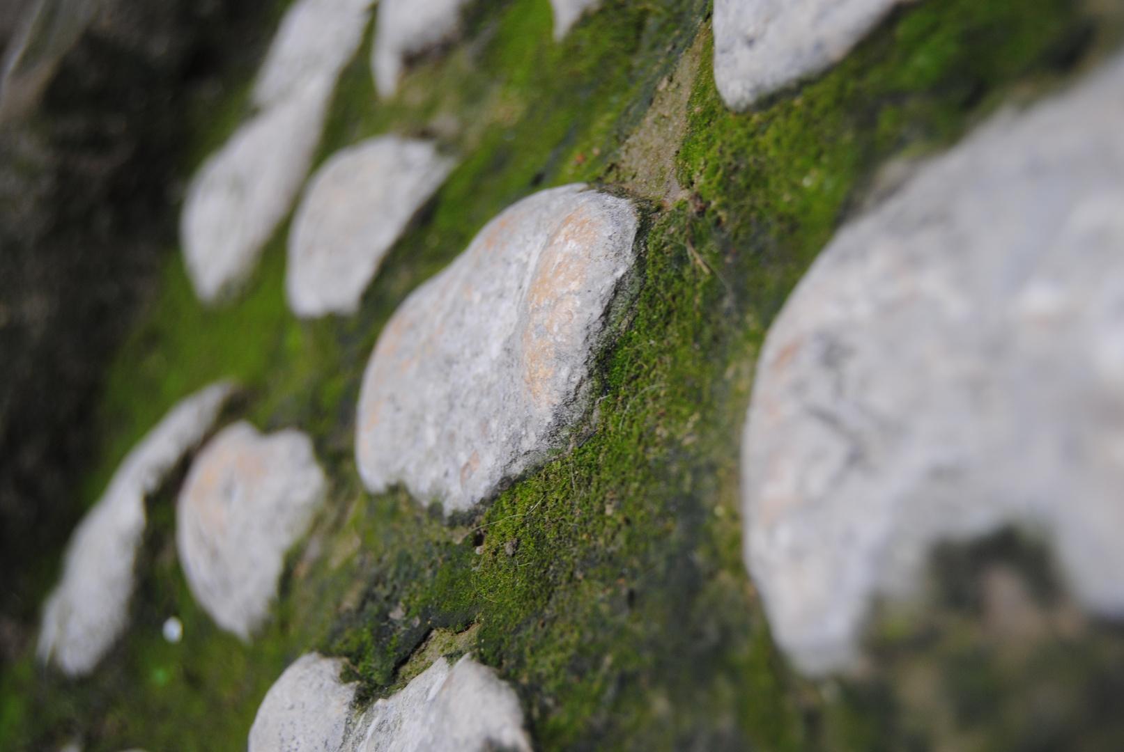 pedres...