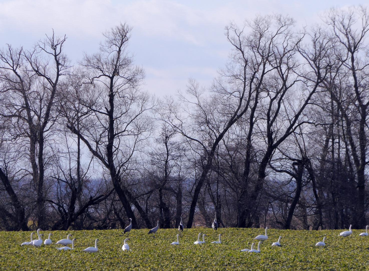 Peene - Landschaft