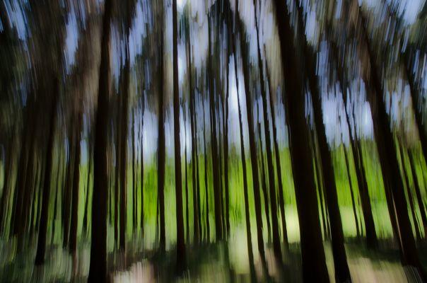 Peinture forestière