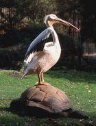 Pelikan beim Sonnenbad