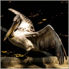Pelikan Nr.2