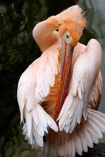 Pelikan - Putzorgie geht weiter
