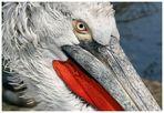 Pelikan, wegen der Farben und so ....