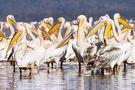Pelikane am Lake Nakuru von Martin Fickert